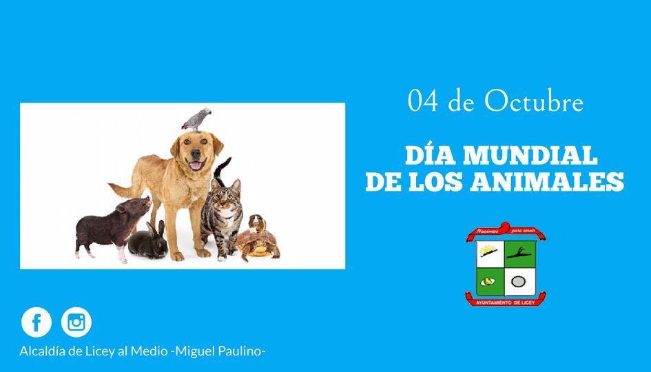 El 4 de octubre se celebra el Día Mundial de los Animales.