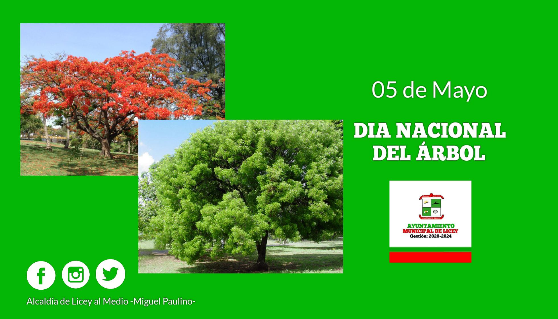 El Día del Árbol.